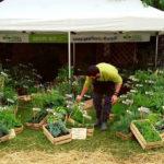 Geel Floricultura partecipa a Erbe nelle Dolomiti presso Calalzo di Cadore