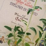 """Premio """"Noale in Fiore"""" 2016: Diploma di merito """"Miglior allestimento"""""""