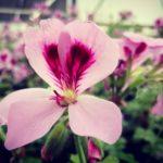 Geel Floricultura partecipa a Il Verdepiano presso San Giorgio di Piano