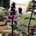 Geel Floricultura partecipa a Carpi in Fiore presso Carpi