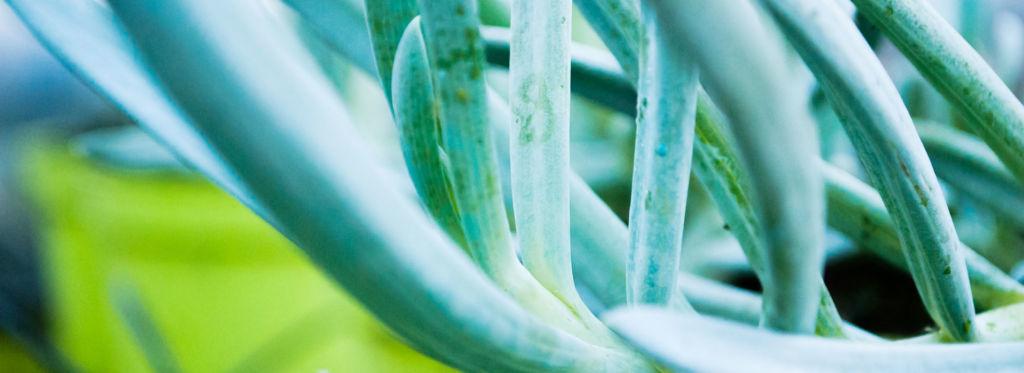 slide-vendita-online-piante-aromatiche