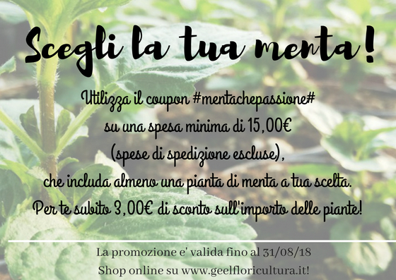 I nostri summer discounts: Mentachepassione!