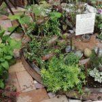 Le erbe nei secoli: coltivazione e storie di civiltà