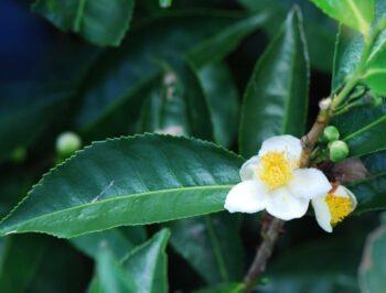 Sustainability tailored to herbal tea: the Erbificio project