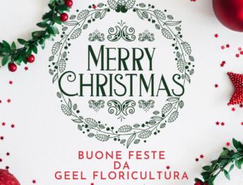 Buone Feste da Geel Floricultura