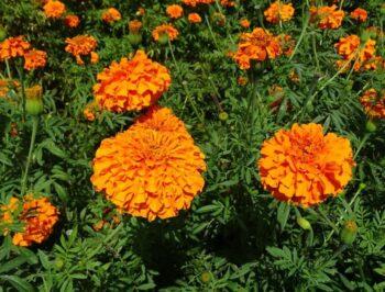Luci e colori: l'arancio!