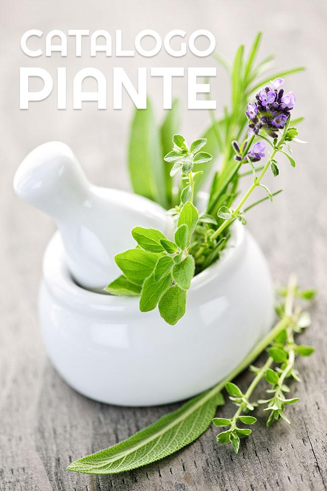 geel floricultura produzione e vendita piante aromatiche padova