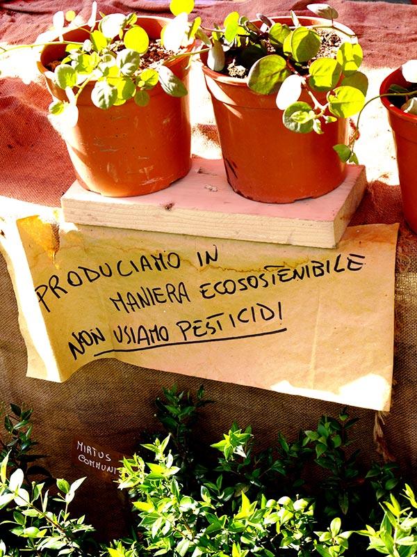 Geel Floricultura - Prduzione Biologica certificata ICEA