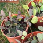 Geel Floricultura. Vivaio piante aromatiche officinali.
